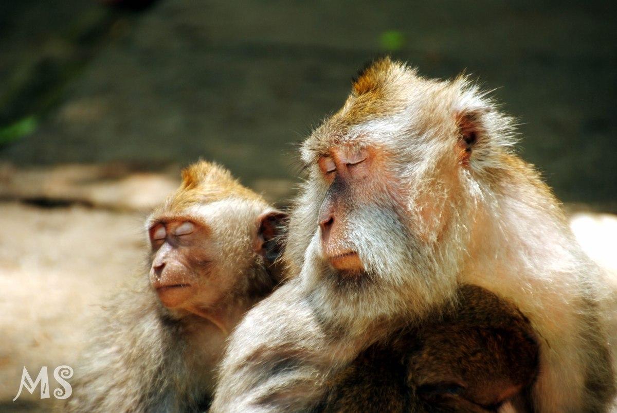 Here monkey, monkey, monkey!