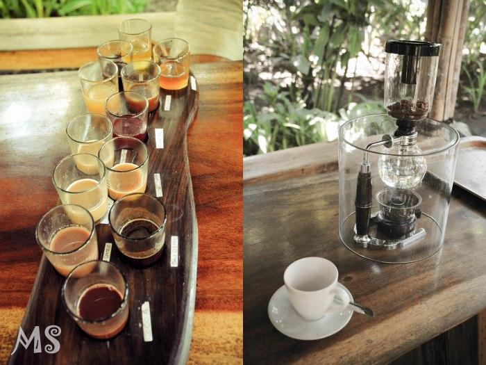 Luwak coffee-2