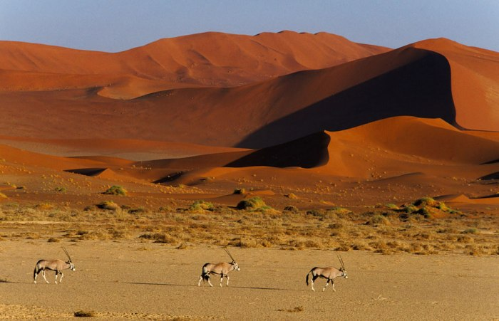 Namib_Naukluft_National_Park_020
