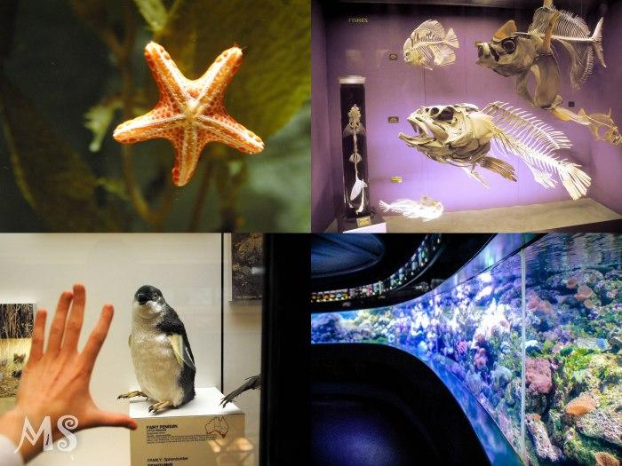aquarium2-2