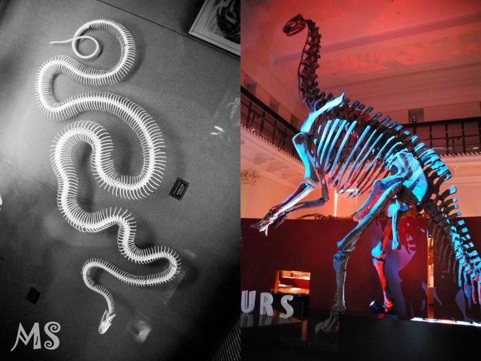 Natural history museum 3-2