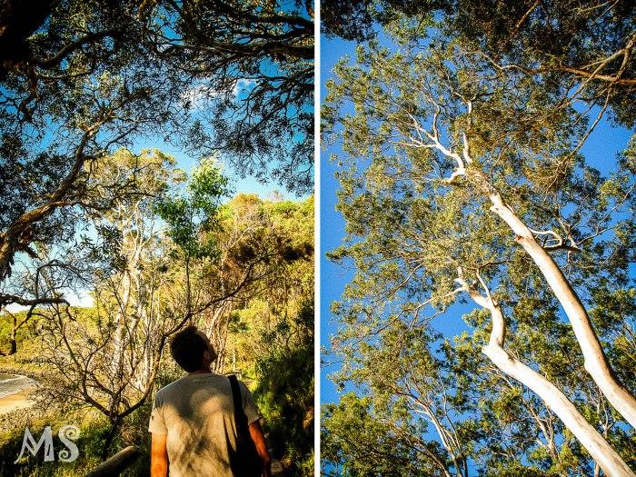Searching for koala-2